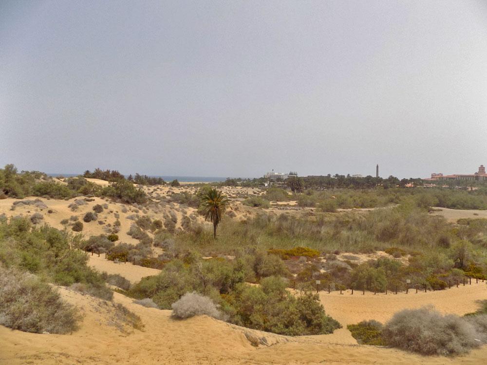 Maspalomas in den Dünen